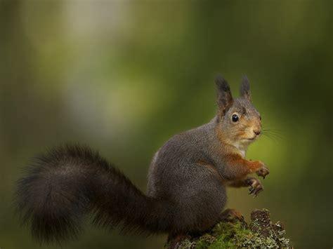 Beautiful Wallpapers Squirrels Wallpaper
