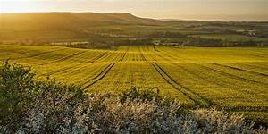 oilseed, fields, over, the, south, downs, sussex