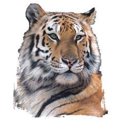 India Top Safari Parks Animals Pinterest Bengal