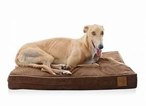 choosing the best dog beds for greyhounds dog n treats With best dog beds for greyhounds