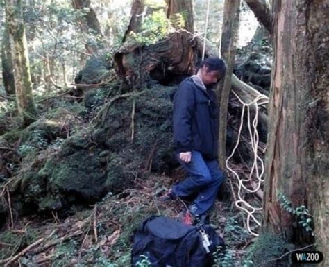 aokigahara forest japan   top ten haunted