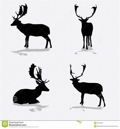 Deer Silhouette Fallow Icons Pictogrammen Het Eps10