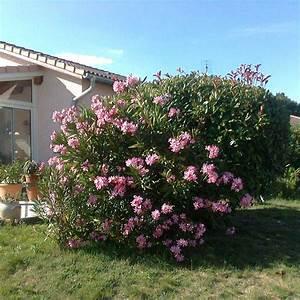 Laurier Rose Entretien : jardins bleus laurier rose ~ Melissatoandfro.com Idées de Décoration