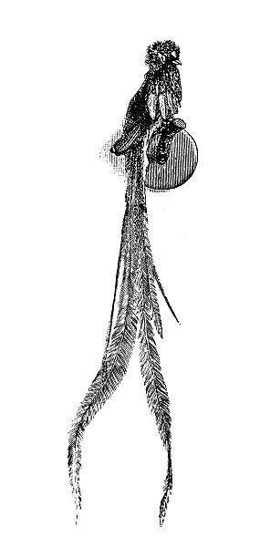 Quetzal Tattoo Design - Tattoo