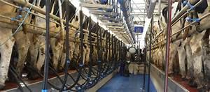 Dairymaster - Catalogus