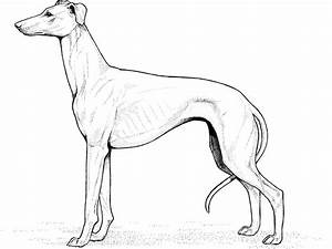 Realistic Dog Breeds Colouring Pages Page 2 Pagdog - Litle ...