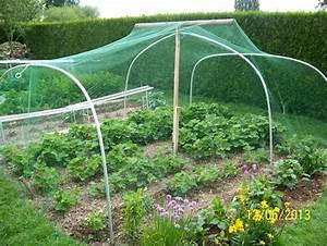 Filet De Protection Jardin : legumes du jardin album photos mon jardin ~ Dallasstarsshop.com Idées de Décoration