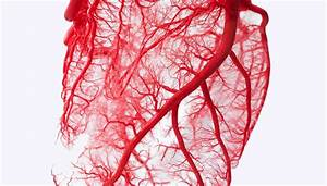 Scientists Create Blood Vessels That Become Living Tissue