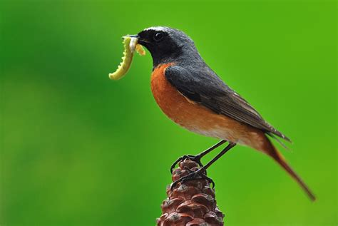 verdant wildlife bird and wildlife tours bird and