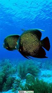 Most beautiful fish Wallpapers Mobile Pics