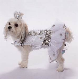 Wedding dresses for dogs great ideas for fashion dresses for Dog wedding dresses