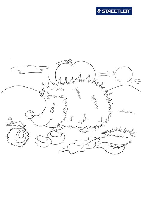 hedgehog coloring pages    print