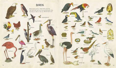 different bird species outdoor education africa