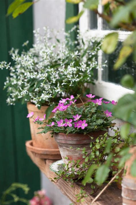 Window Ledge Plant Pots by 683 Best G Container Gardening Images On