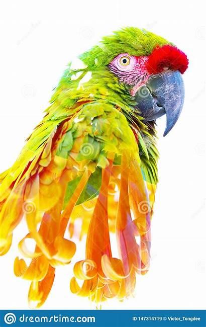 Orange Tropical Exposure Parrot Double Flowers Combined
