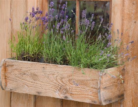 Was Passt Zu Lavendel Im Blumenkasten by Lavendel Im Blumenkasten Die Positive Wirkung