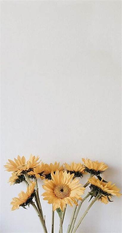 Aesthetic Yellow Wallpapers Backgrounds Flower Iphone Background
