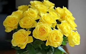 Yellow Rose Wallpaper 37 Free Hd Wallpaper ...