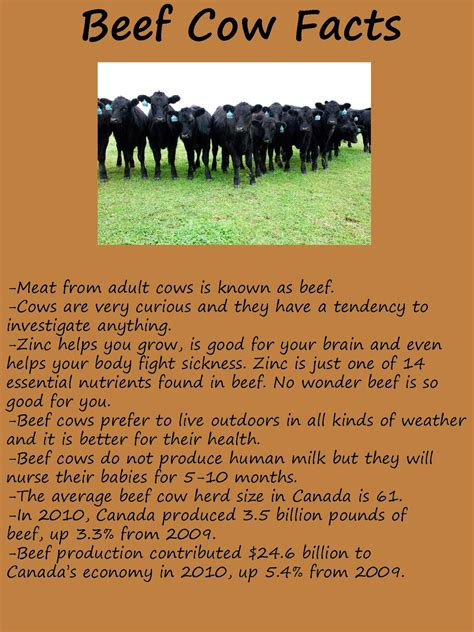 optimist club  norwich district corn maze farm facts