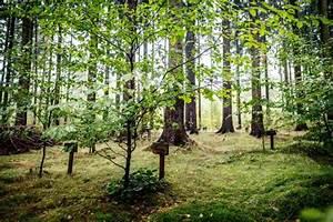 Tiere Im Garten Begraben : ein abschiedswald nicht nur f r hund und katz ~ Lizthompson.info Haus und Dekorationen