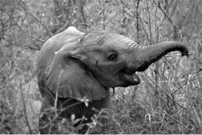 Elephant Wallpapers Desktop Elephants Printed Chess Aesthetic