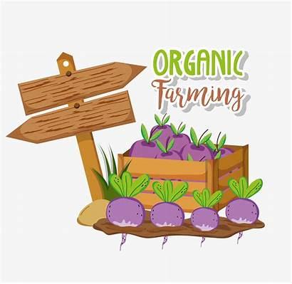 Organic Farming Cartoons Vector Farm Clipart Graphic