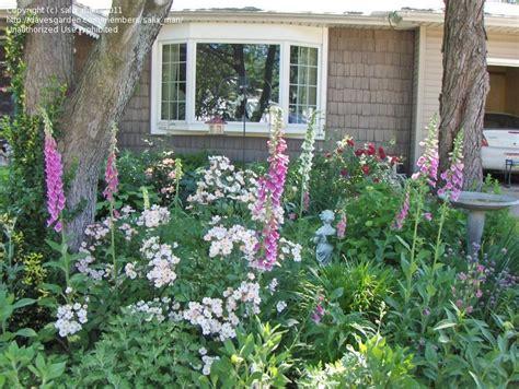 specialty gardening need alist of cottage garden plants
