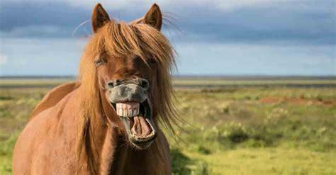 Diese Pferde Haben Schönere Frisuren Als Sie! Weekendat