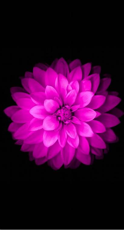 Iphone Dark Floral Flower Background Wallpapers Backgrounds