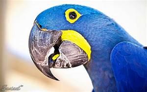 Animalia & Natura | Seviant™ Imagery & Design