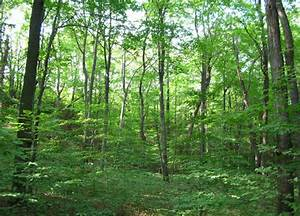 Lexy Blog: Stakeholders drum support for forest ...