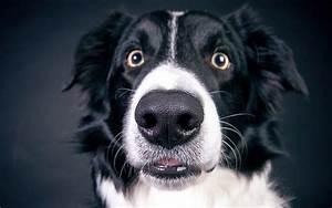 dry dog nose