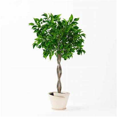 Trunk Tree Plant Braided Potted Patio 3d