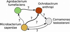 Interactions in a model microbial community – The Mitri lab