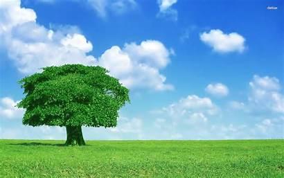 Tree 4k Lonely Oak Wallpapers Trees Desktop