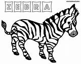 Zebra Coloring Colouring Animal African Coloringway sketch template