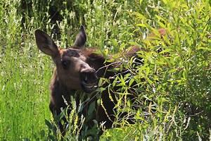 Wildlife Expeditions Of Teton Science Schools Spring