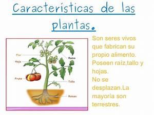 Mi presentacion jessica martinez lopez las plantas!!!!!