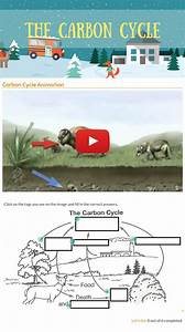 Wizer Me Blended Worksheet  U0026quot The Carbon Cycle U0026quot
