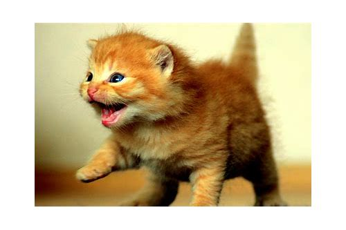 free kitten pictures to download