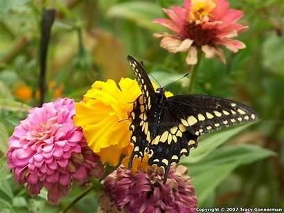 Kupu Cantik Butterfly Kumpulan Unicorn Koleksi Wallpapers