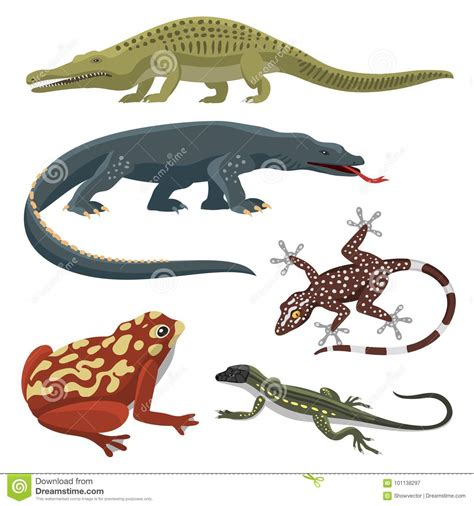 Reptile And Amphibian Colorful Fauna Vector Illustration