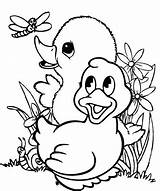 Duck Coloring Pages Cute Fun Baby Ducklings Children sketch template