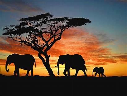 African Safari Elephants Wallpapers Wallpapersafari Africa Sunset