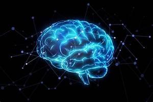 U0026 39 Error Neurons U0026 39  Play Role In How Brain Processes Mistakes