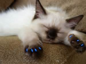 nail caps for cats at i started laughing at this but then i wasn t