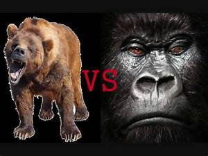 Silverback Gorilla VS. Grizzly Bear - YouTube