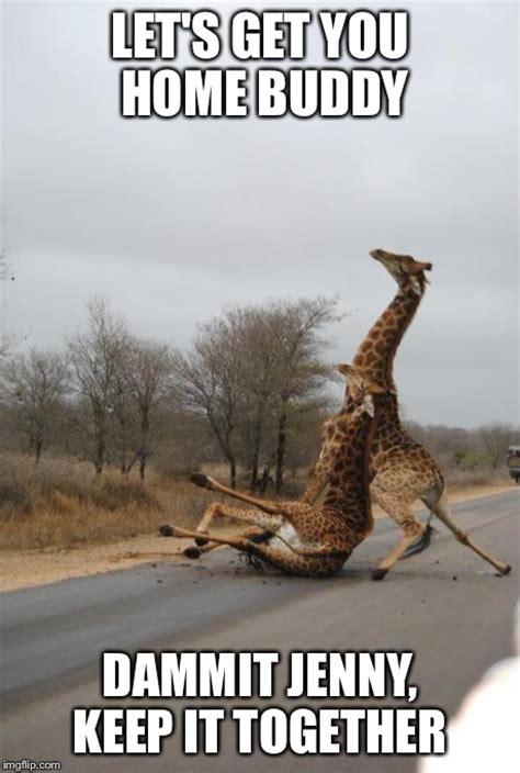 Falling Meme - falling giraffe imgflip
