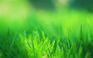 Green Grass Field Wallpapers | HD Wallpapers | ID #14660
