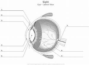 14 Best Images Of Eye Diagram Worksheet